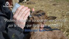 Podemos juzgar el corazón de una persona por la forma que trata a los animales.