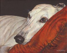 Acrylic painting of a greyhound dog × 10 inches). / of the proceeds from the sale of this image will go to Pets In Need. Foto Portrait, Greyhound Art, Grey Hound Dog, Arte Pop, Dog Portraits, Illustrations, Tag Art, Animal Paintings, Beautiful Dogs