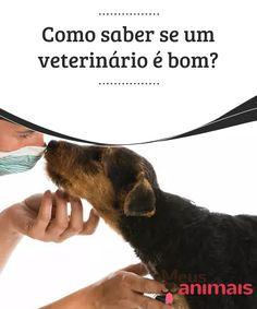 Como saber se um veterinário é bom?   Estamos conscientes da importância do veterinário na vida de nossos animais de estimação e em nossas vidas diárias. Saiba como escolher o melhor para seu pet.