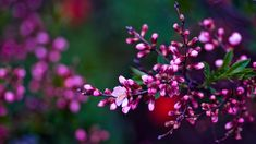 spring flowers images 17539