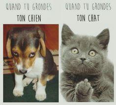 Chat /vs/ chien