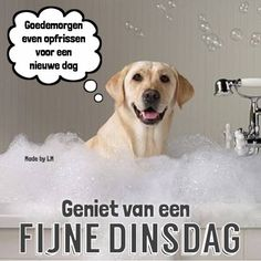 Dinsdag plaatje 2 Bon Mardi, Get To Know Me, I Love Dogs, Vintage Posters, Good Morning, Tuesday, Qoutes, Inspirational Quotes, Mood
