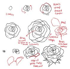 draw the rose #tutorials #rose #flowers