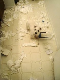 Westies mess with you. You do not mess with Westies.