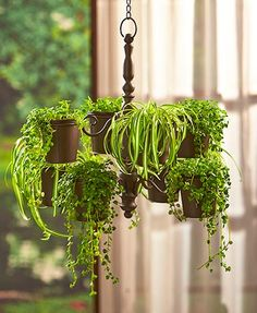 Display multiple plants in a limited space with this Plant Chandelier. The vintage-look fixture features scrolled detailing and a rustic finish. Holds 8 small p