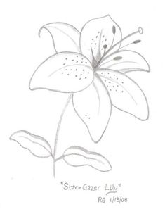 Mesmerising Drawing Flowers Mandala Ideas Flower Drawings Tips how to draw a star lily yahoo image search results. how to draw a tiger lily flower. Flower Drawing Tutorials, Flower Sketches, Drawing Sketches, Lilies Drawing, Floral Drawing, Drawing Flowers, Lilly Flower Drawing, How To Draw Flowers, Doodle Drawings