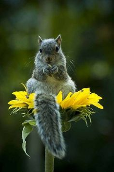 New nature animals cute pictures Ideas Nature Animals, Animals And Pets, Baby Animals, Funny Animals, Cute Animals, Beautiful Creatures, Animals Beautiful, Beautiful Beautiful, Cute Squirrel