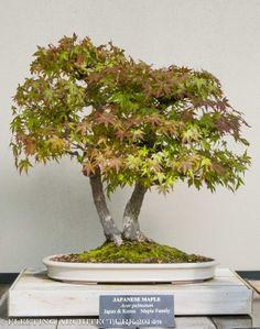 longwood bonsai blog 16 Photos for Our Bonsai Lovers