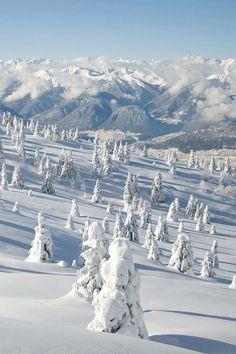 newlifeplease:  Winter wilderness.