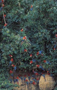 Wildlife of the Amazon River