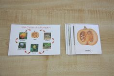 Life Cycle of a Pumpkin (Science/Language). This is also from last year and I printed it off from the Montessori For Everyone website.
