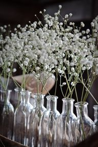 Milk bottles with baby's breath flowers.