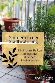Gärtnern in der Stadtwohnung? Kräuter gehen fast immer und sind dabei nicht nur schön, sondern auch lecker! Basilikum & Co. brauchen keinen eigenen Garten, aber einen ausreichend großen Topf, um sich wohl zu fühlen. Sie können wunderbar in Töpfen oder Kästen auf der Fensterbank angepflanzt werden und verfeinern viele Gerichte in deiner Küche. Diese Gemüse kannst du auf dem Balkon pflanzen und so gelingt dir Urban Gardening auf dem Balkon. #edel-naturwaren.de Smoothies, Zero, Gardening, Plants, House, Healthy Snack Foods, Edible Plants, Calendula, Large Backyard