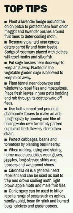 Plant pairings