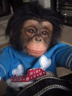 Reborn chimp by judy dickinson