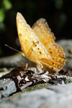 Free stock photo of insect, butterfly
