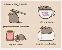 Pusheen should meet Sheldon the tiny dinosaur! Pusheen Book, Chat Pusheen, Pusheen Stuff, Fancy Cats, Cute Cats, Cat Fun, Kawaii Drawings, Cute Drawings, Crazy Cat Lady
