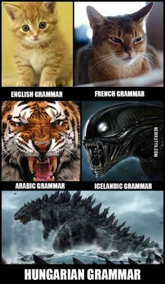 """I think Hungarian is the only European language that can challenge Finnish for the title of """"hardest language to learn"""" Funny Cats, Funny Jokes, Hilarious, Cat Tiger, Nada Personal, German Grammar, French Grammar, Just For Fun, Cat Memes"""