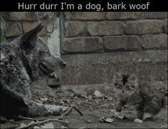 New post on catsdogsblog