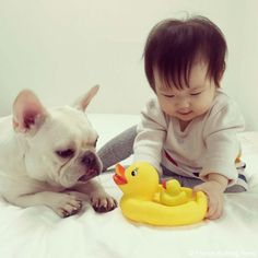 アヒルの親子♥️ #frenchbulldog #frenchie #dog #daughter #babygirl #フレンチブルドッグ #女の子
