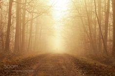 Walk towards the light by jerometetu41 #Landscapes #Landscapephotography #Nature #Travel #photography #pictureoftheday #photooftheday #photooftheweek #trending #trendingnow #picoftheday #picoftheweek