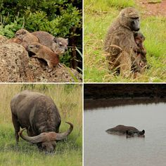 Nairobi National Park Nairobi, Brown Bear, Kangaroo, National Parks, Animals, Baby Bjorn, Animales, Animaux, Animal