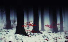 naturaleza árboles paisajes de bosque deja temporadas nieve madera plantas de…
