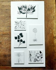 composição de folhas arte
