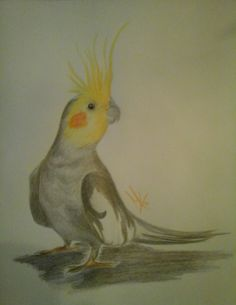 Valkparkiet 7-12-2015 (Colored pencil) Colored Pencils, Parrot, Ink, Painting, Animals, Colouring Pencils, Parrot Bird, Animales, Animaux