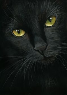 black cat portrait- pastel painting by art-it-art on DeviantArt – Ich - Animal I Love Cats, Crazy Cats, Cool Cats, Beautiful Cats, Animals Beautiful, Cute Animals, Gorgeous Eyes, Black Cat Art, Black Cats