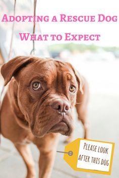 What to expect when adopting or rehoming a rescue dog.