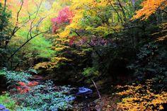 November Colors 01Nov2015-12 by MSchmidtArtwork.deviantart.com on @DeviantArt