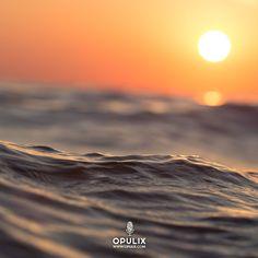 Llegaron las olas saladas del mar trayendo sus aguas envueltas en sol vienen con la fuerza azul entre espuma vienen bañadas con música y ron.
