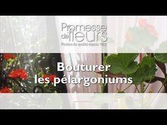Promesse de Fleurs - YouTube Comment Planter, Ale, Planters, Simple, Composition, Gardening, Gardens, Flowers, Container Gardening