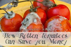 Rotten Tomatoes Save you money...good bacteria for the septic tank....other tank solutions