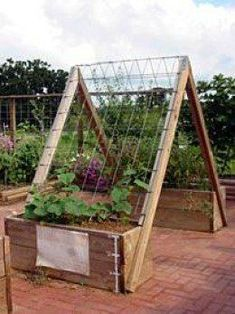 You can train vegetables like cucumbers, pole beans, and squash to go up instead of out.