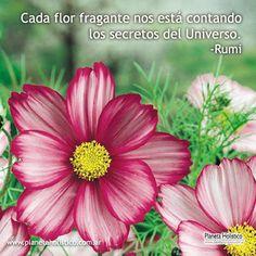 Frase de Rumi - Cada flor fragante
