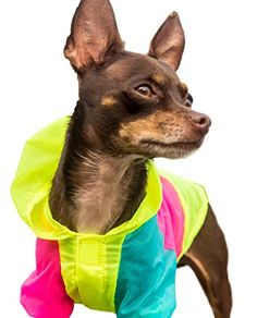 Neon Dog Jacket  Teacup XXS XS and Small Dog Clothes  Chihuahua and Yorkie Clothes Medium *** To view further for this item, visit the affiliate link Amazon.com.