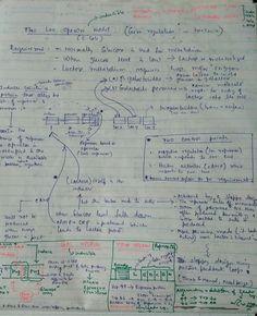 recombinant dna technology worksheet dna pinterest worksheets and science biology. Black Bedroom Furniture Sets. Home Design Ideas