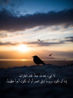 Arabic Words, Arabic Quotes, Bien Dit, Unconditional Love, Doha, Beautiful Words, Goats, Islamic, Imagination