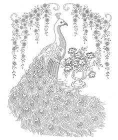 Peacock Coloring Sheets peacock coloring pages tail down Peacock Coloring Sheets. Here is Peacock Coloring Sheets for you. Peacock Coloring Sheets bird peacock coloring pages free printable coloring pages Animal Coloring Pages, Peacock Coloring Pages, Vintage Embroidery, Vintage Patterns, Color