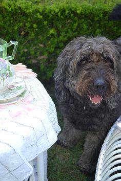 """Butler"" the dog - so cute!!"