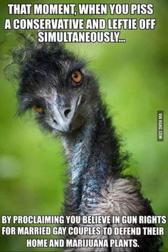 """Emu ~ The largest bird native to Australia ~ Miks' Pics """"Fowl Feathered Friends… Pretty Birds, Beautiful Birds, Animals Beautiful, Funny Dogs, Funny Animals, Cute Animals, Wild Animals, Baby Animals, Animal Humor"""