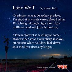 """Lone Wolf"" by Aaron Belz #poem #poetry"