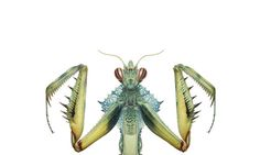 The French Painter Bernard Durin's Close Look at Insect Life - NYTimes.com - want this book!