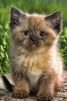 Cute Baby Cats, Kittens And Puppies, Cute Cats And Kittens, Cute Baby Animals, Kittens Cutest, Animals And Pets, Funny Animals, Funny Cats, Pretty Cats
