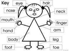 parts of the body for kids worksheet pdf - Google Search
