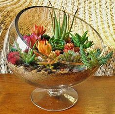 Sunshine & Succulents | Succulent terrariums, tiny gardens, … | Flickr