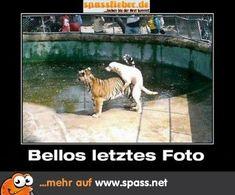 Hund Tiger GV