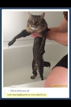 "How to shrink your cat...LOL I can't stop laughing! This reminds me of the ""Lion"" Hair cut people give to their cats!"